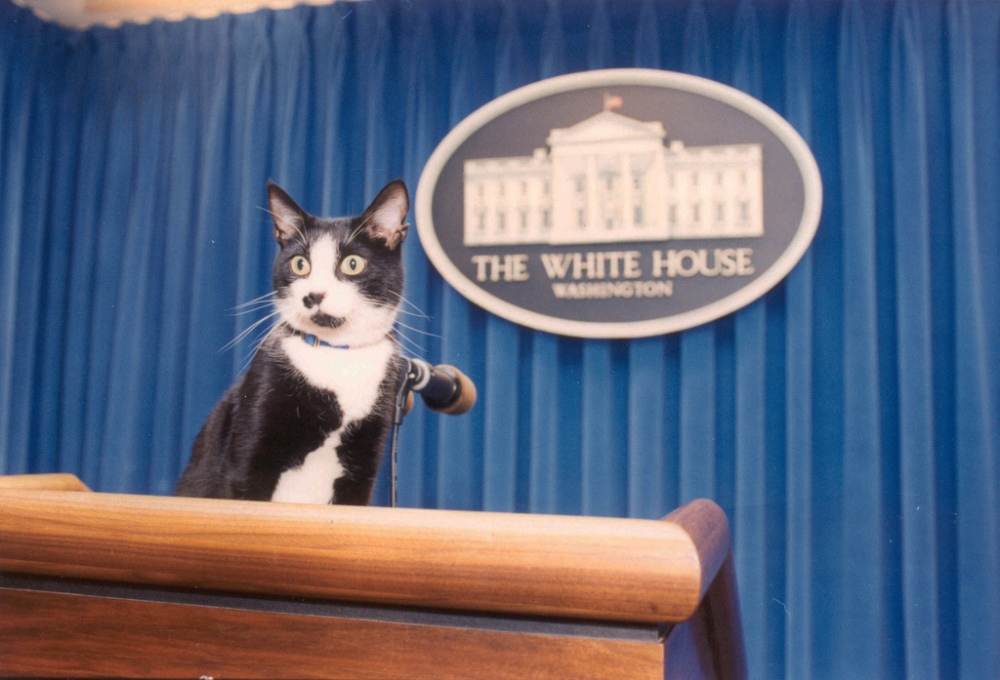 Socks, White House Cat